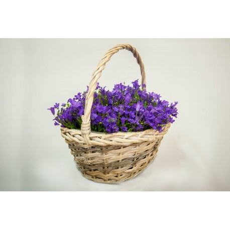Koszyk fioletowy