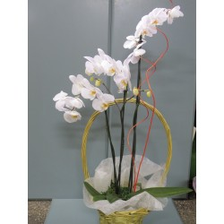 Orchidea w koszu